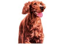 Изображение Для Собак